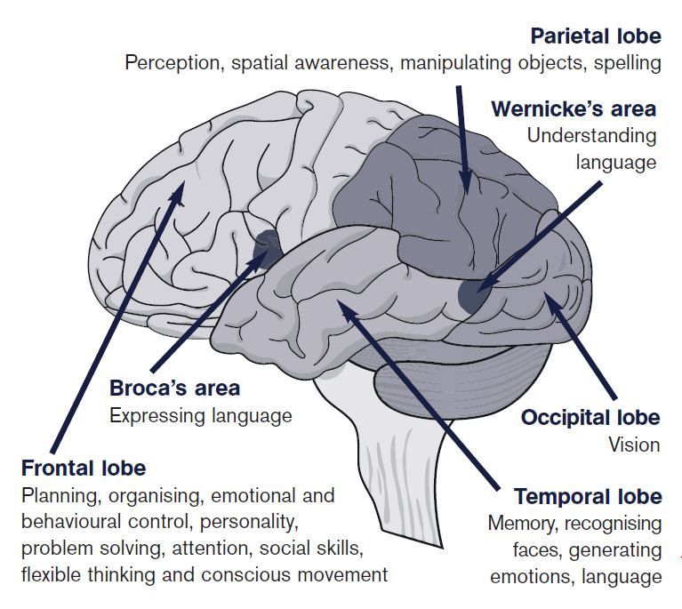Executive Functions and Corresponding Brain Areas